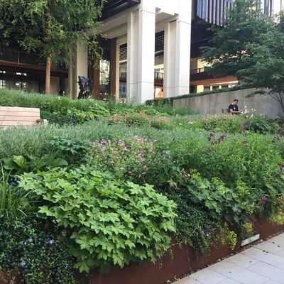 Soft landscaping IMG 8468