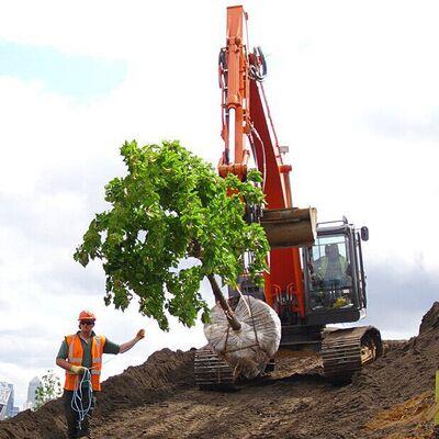 Hillock Rem Tree 038w