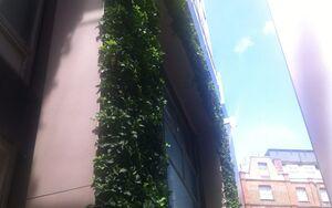 Photo Wall 3 Aug 13