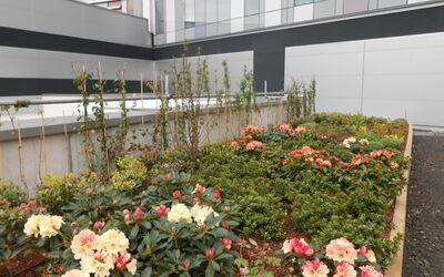Glasgow Hospital Childrens Roof 2