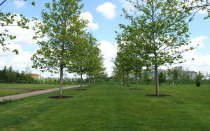 Olympic Park DSC 0544