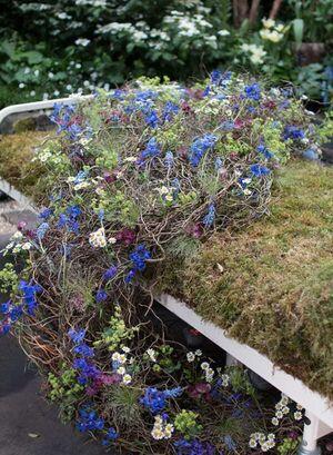 RHS Chelsea Flower Show 2016 The Garden Bed Asda Florist Alison Doxey Stephen Welch Artisan Garden Flowerona 1