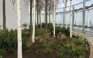 Vauxhall Sky Gardens IMG 5510